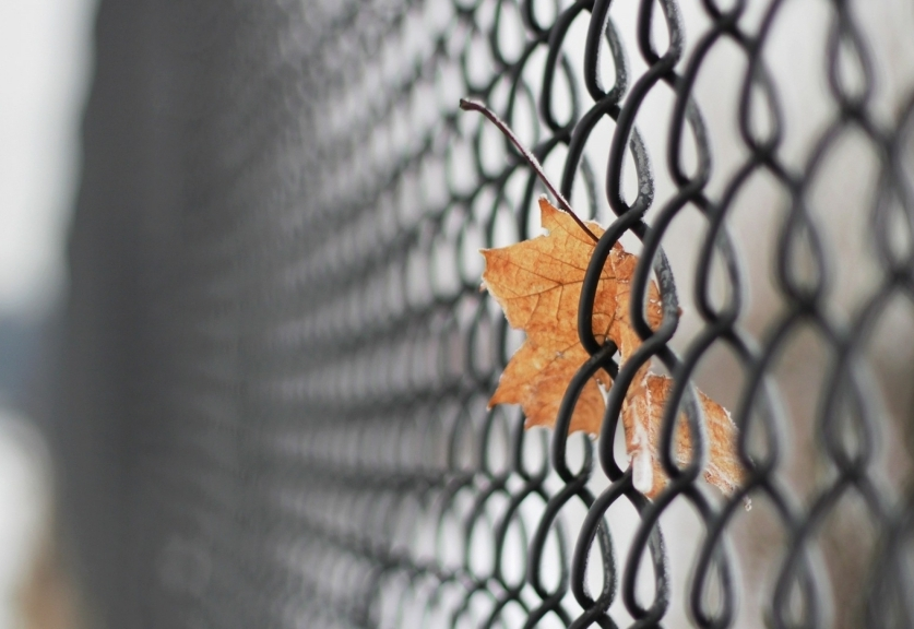 fences_leaves_mesh_chain_link_fence_1920x1080_365271-1024x5761-e1416299104628